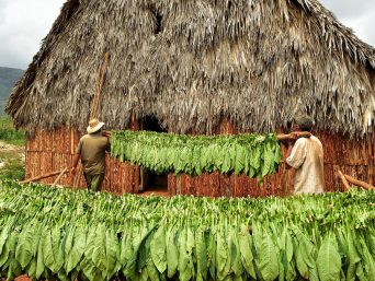 Cuban farm in Vinales