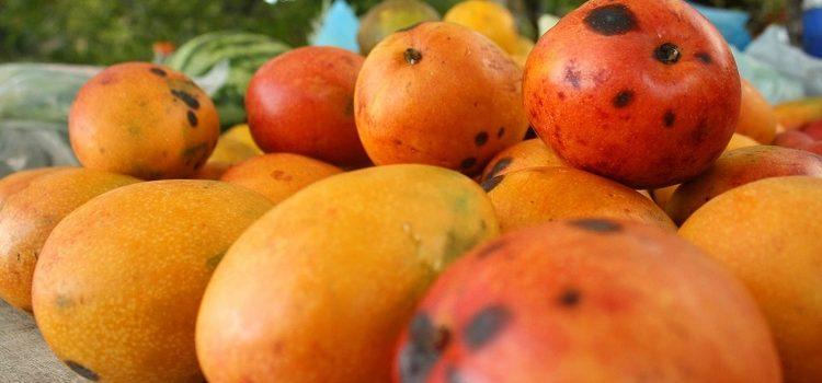 Mangos of Cuba