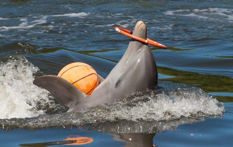 Delfin Jugando con una pelota